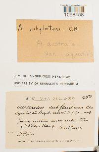 Andreaea australis image