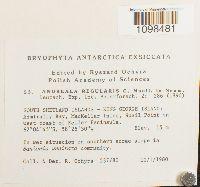 Andreaea regularis image