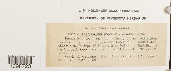 Anomobryum sericeum image