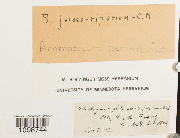 Anomobryum perimbricatum image