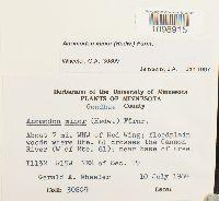 Anomodon minor image