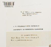 Weissia muhlenbergiana image