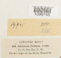 Atrichum selwynii image