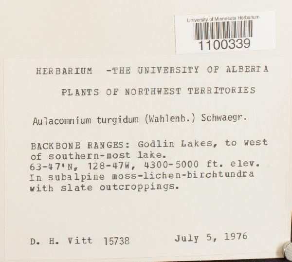 Aulacomnium turgidum image