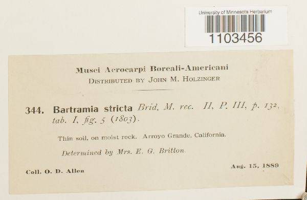 Bartramia image