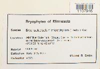 Bryohaplocladium microphyllum image