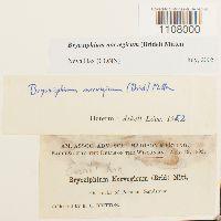 Bryoxiphium norvegicum image