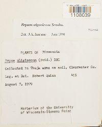 Bryum algovicum image