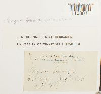 Bryum pseudotriquetrum image