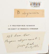 Bryum uliginosum image