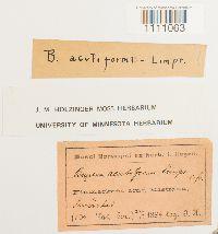 Bryum axel-blyttii image