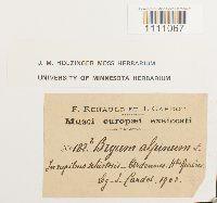 Bryum alpinum image