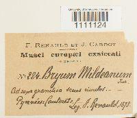 Bryum mildeanum image