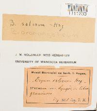 Bryum salinum image