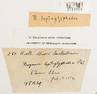 Bryum leptoglyphodon image