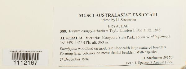 Bryum campylothecium image