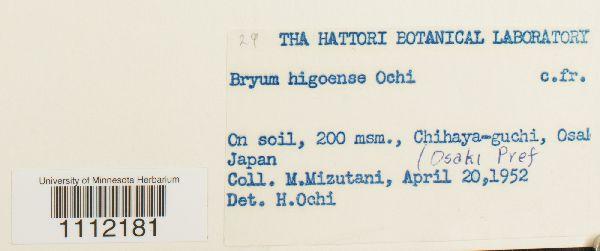 Bryum higoense image