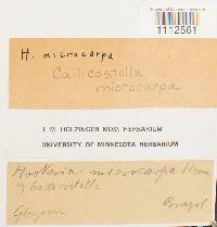 Image of Callicostella microcarpa
