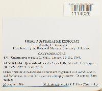 Calymperes erosum image