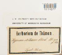 Campylium stellatum image