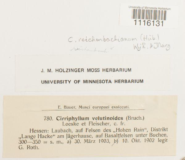 Sciuro-hypnum flotowianum image