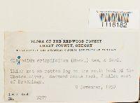 Claopodium crispifolium image
