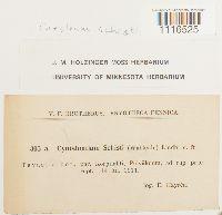 Cynodontium schisti image