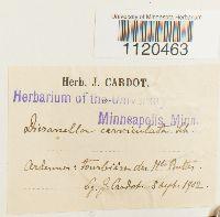Dicranella cerviculata image