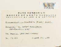 Dicranodontium denudatum image