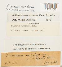 Dicranum montanum image