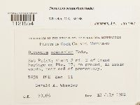 Dicranum scoparium image
