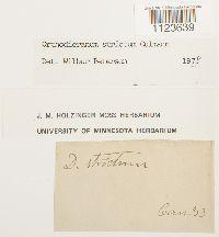 Orthodicranum tauricum image