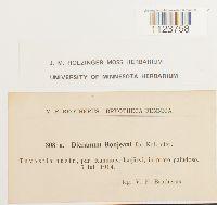 Dicranum bonjeanii image