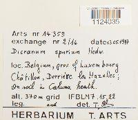Dicranum spurium image