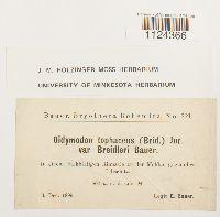 Didymodon tophaceus image