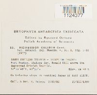 Didymodon brachyphyllus image