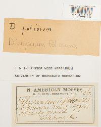 Diphyscium foliosum image