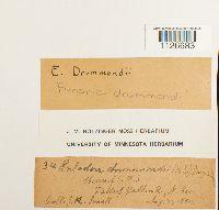 Entosthodon drummondii image