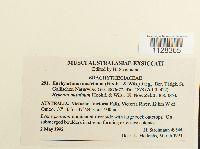 Image of Eurhynchium austrinum
