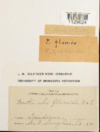 Fontinalis flaccida image