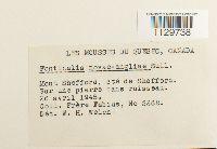 Fontinalis novae-angliae image