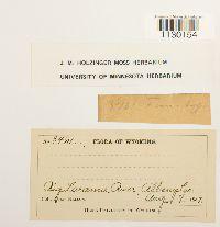 Funaria hygrometrica image