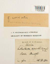 Image of Funaria curviseta