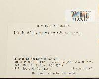 Grimmia affinis image