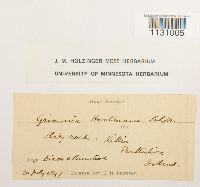 Grimmia hartmanii image