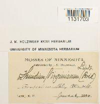 Haplocladium virginianum image