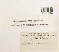 Hedwigia ciliata image