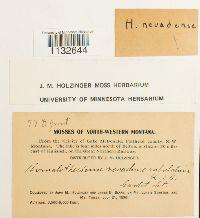 Homalothecium nevadense image
