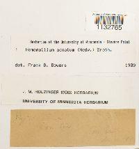 Homomallium adnatum image
