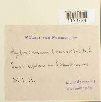 Loeskeobryum brevirostre image